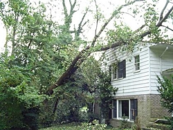 Hurricane Isabel....   The Morning After-h5.jpg
