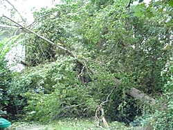 Hurricane Isabel....   The Morning After-h7.jpg
