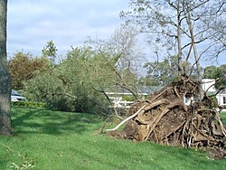 Hurricane Isabel....   The Morning After-h12.jpg