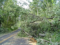 Hurricane Isabel....   The Morning After-wayout2.jpg