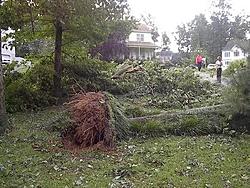 Hurricane Isabel....   The Morning After-im001105.jpg