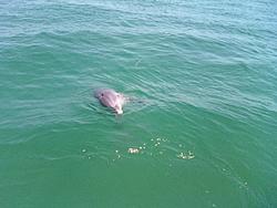Boating at Cayo Costa, FL (32 photos)-0423011503.jpg