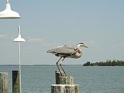 Boating at Cayo Costa, FL (32 photos)-dsc00952-1296-x-972-.jpg