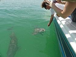 Boating at Cayo Costa, FL (32 photos)-dolphins-1296-x-972-.jpg