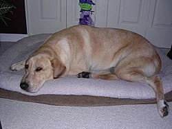 Buy a Dog !!!-jake-001.jpg