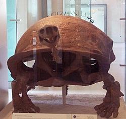 GORDO is 40 today!!-turtle.jpg