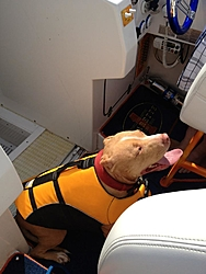 Boating Dog of the  week!-lily1.jpg