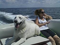 Boating Dog of the  week!-sp-boat-1.jpg