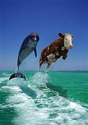 history cookies  did everting still not working-307dolphins-med.jpg
