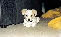 Newest Edition to our family-teddy-sitting2.jpg