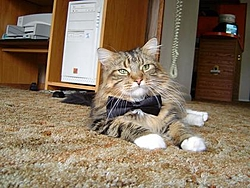 Lost our Old friend Wednesday-bowtie-shadow.jpg