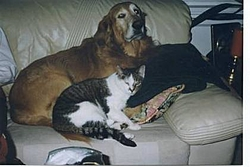 Lost our Old friend Wednesday-taz-kit-1.jpg