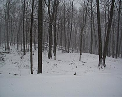 The Official Snow Thread-snow.jpg