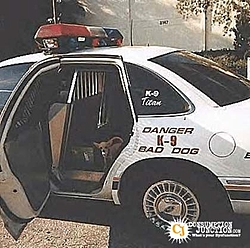Troutly's New Police  Car-little-k9.jpg
