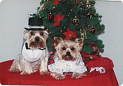What one are you?-dog-christmas-clothes.jpg