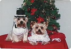 Merry Christmas Thread-dog-christmas-clothes.jpg