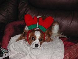 Merry Christmas Thread-sscn1454.jpg