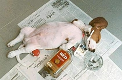 Where will you be to ring in the new year?-drunk-pup.jpg