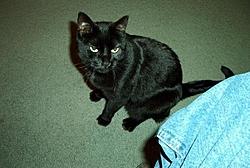 Satan cat-pepsi2.jpg