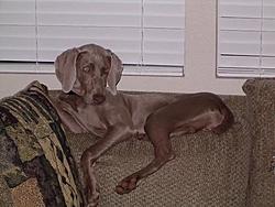 Need Help Naming A Puppy!!!-sadie.jpg