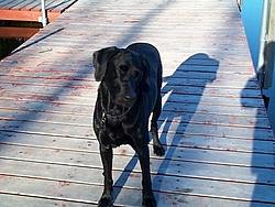 Man's Best Friend, Beside His Boat-dcp01630.jpg