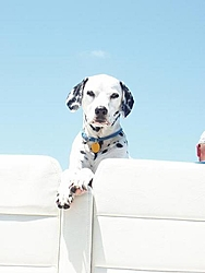 Man's Best Friend, Beside His Boat-may25-03opbastpeteflorida-004.jpg