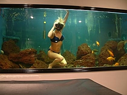 Fish Tanks...Salt or Fresh?-mermaid-058.jpg
