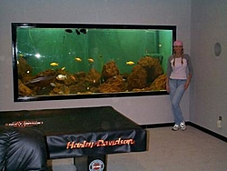 Fish Tanks...Salt or Fresh?-mandy-tank-resize.jpg