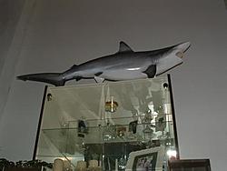 My First Shark-dscf0002.jpg