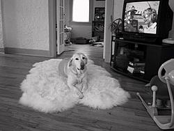 Happy Birthday to Tara-tara-dog-rug.jpg