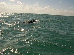 Florida Dolphins dying ?-kw2.jpg