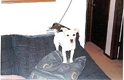 Puppy For sale-teddy-5months2.jpg