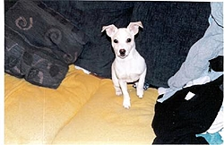 Puppy For sale-teddy-5months.jpg