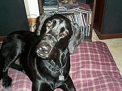 Puppy For sale-dog-boy.jpg