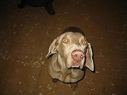 Puppy For sale-105-0533_img.jpg