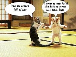 OT: For the cat lovers-kitty-lies.jpg