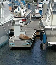 Pretty damn sure I saw Gary today . . .-harbor-seal.jpg