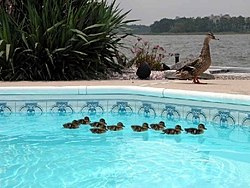 Floating Report Heading to Jersey-duck-party2small.jpg