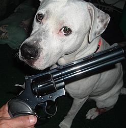 """""""My Way"""" Seized in NY. Weapons Found-dscf0214.jpg"""
