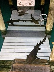 In case you didn't know........-nurse-sharks.jpg