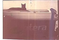 Pantera pics. from the early days ( History )-black-cat.jpg