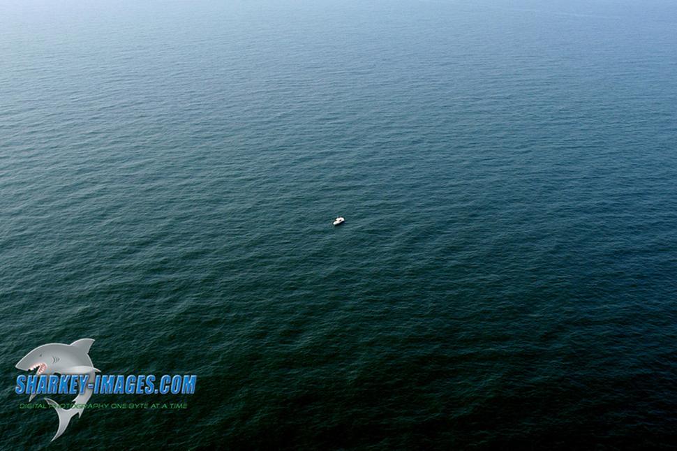 Sharkey03_large